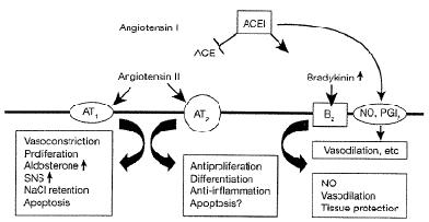 Renin-Angiotensin-Aldosterone-h1